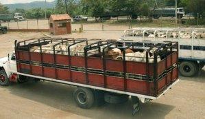 El contrabando de carne hacia Colombia no da tregua, pese a los operativos