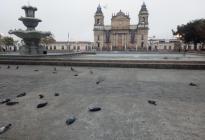 Hallaron más de 100 aves muertas en una plaza de Guatemala (video)