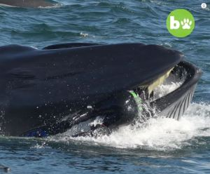 ¿Y Pinocho?… Casi fue tragado por una ballena y quedó registrado en VIDEO