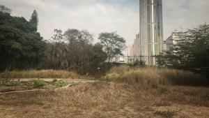 El Jardín Botánico de Caracas se marchita y necesita donantes de agua (fotos)