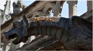 Las abejas que viven en el techo de Notre Dame se salvaron del incendio (fotos)
