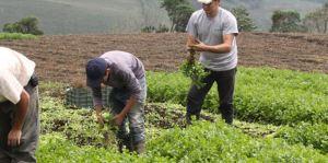 """Fedeagro: Venezuela atraviesa """"situación caótica"""" en el sector productivo"""