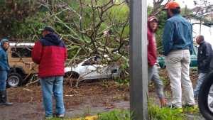 Le cayó un árbol sobre el carro mientras esperaba por combustible #14Jun (foto)