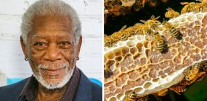 Morgan Freeman salva el planeta tras convertir su rancho en un santuario de abejas