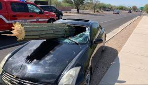 ¡MILAGRO! Conductor evitó una grave lesión cuando un cactus enorme le perforó el parabrisas