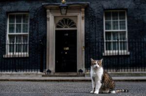 ¿Qué sucederá con el gato Larry cuando Boris Johnson se mude a Downing Street?