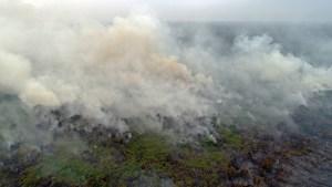 Claves del desastre medioambiental de los incendios que arrasan Indonesia