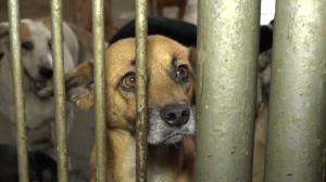 ¡TRAGEDIA! Mascotas abandonadas, las víctimas más vulnerables a la crisis (VIDEO)