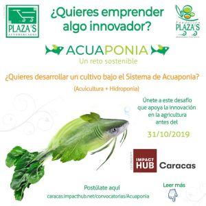 Automercados Plazas e Impact Hub Caracas buscan proyectos bajo el sistema de Acuaponia