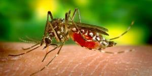 Detectaron el primer caso de contagio de dengue por transmisión sexual en el mundo