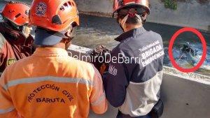 Recuperaron un cadáver en el río Guaire a la altura de Las Mercedes