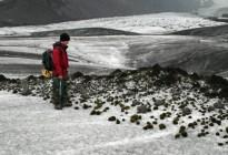 El raro fenómeno de los ratones glaciares que sorprendió a los científicos (Fotos)