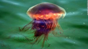 La CLAVE de la velocidad de las medusas que podría usarse en vehículos