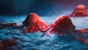 "Descubren que las células cancerosas son capaces de hibernar ""como los osos"" para sobrevivir a la quimioterapia"
