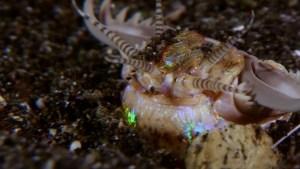 Descubren rastros fósiles de un gusano gigante con poderosas mandíbulas que acechaba bajo el lecho marino