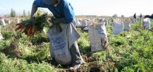 Invasiones y escasez de diésel: Los problemas que enfrentan productores agropecuarios