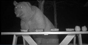"""Los osos le robaban la miel que fabricaba… y decidió convertirlos en sus """"catadores"""" (VIDEO)"""