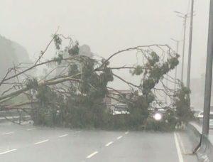 Chaparrón causó caída de varios árboles en la Gran Caracas este #27Sep (Fotos y Videos)