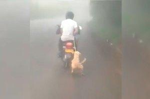 ¡INDIGNANTE! Amarraron a un perrito en una moto y lo arrastraron por una carretera en Colombia (VIDEO)